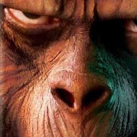 <em>The Rise of the Planet of the Apes</em> Gets Release Date