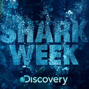 Andy Samberg Signs On To Host <em>Shark Week</em>