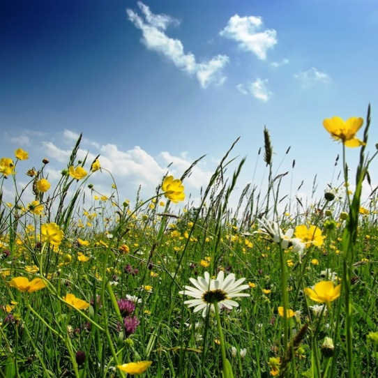 The Playlist Project: Songs for Spring