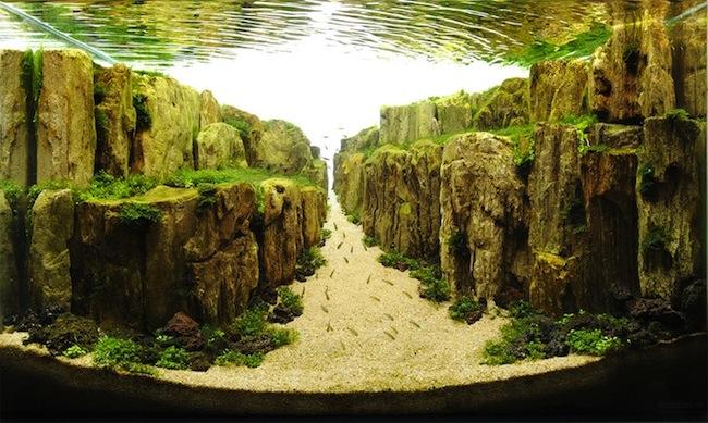 AquaticArt2.jpg