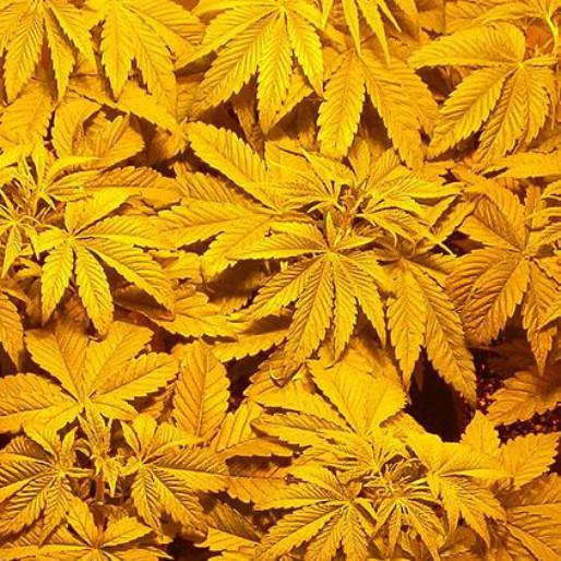 Drug Raids Benefit Rochdale AFC