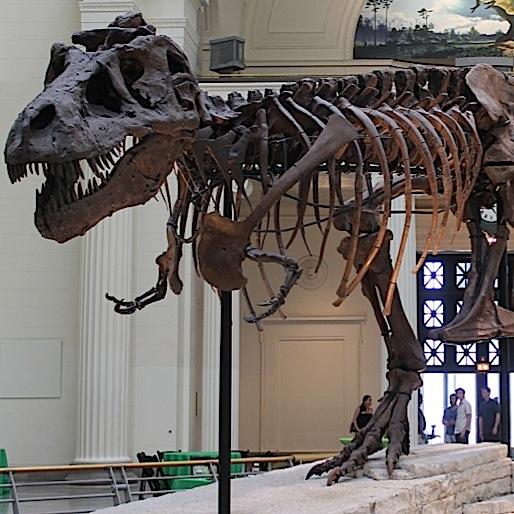 <i>Dinosaur 13</i>
