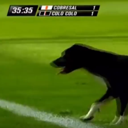 Dog On The Pitch! Chilean Edition