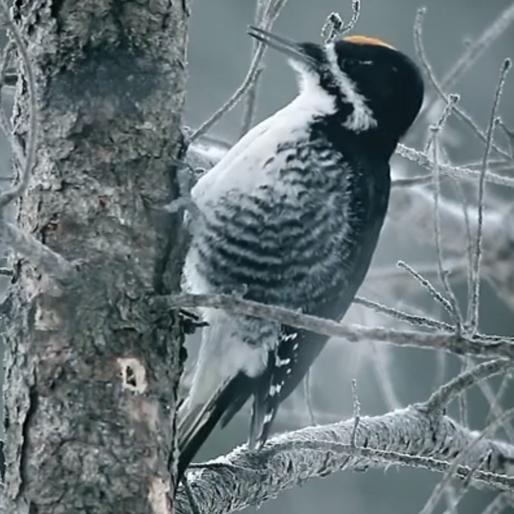 Watch the 'Fargo' Season Two Teaser, Feat. Birds 'n Guns