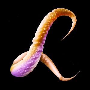 Creepy Animated Typeface Uses Wriggling Animal Limbs