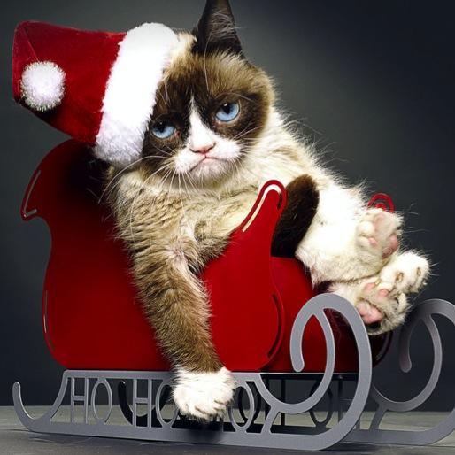 <i>Grumpy Cat's Worst Christmas Ever</i> Review