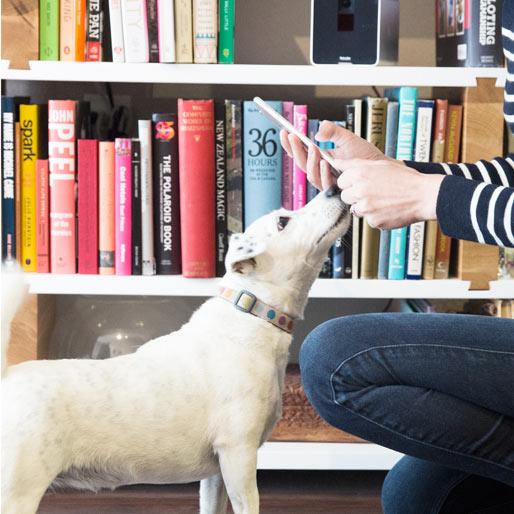 22 of the Best-Designed Pet Accessories