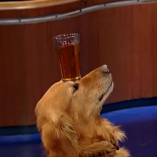 Dog Balances Beer On His Head
