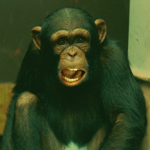 "<i>Big Time In Hollywood FL</i> Review: ""Monkey Largo"""