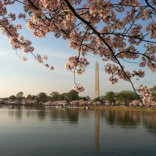 A Cherry Blossom Weekend in D.C. Without the Crowds