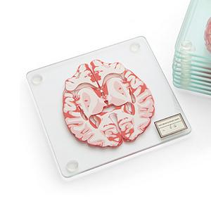 "ThinkGeek Offering New ""Brain Specimen"" Coasters"