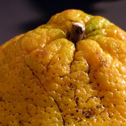 The New Orange: 6 Funky Citrus Fruits You Should Know