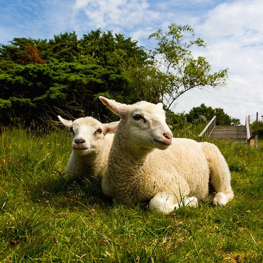 Denmark Bans Bestiality While America Still Isn't Sure