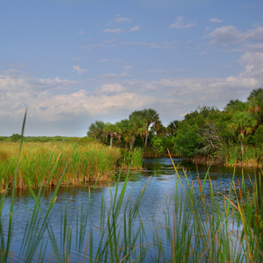 10 Great State Parks in Florida