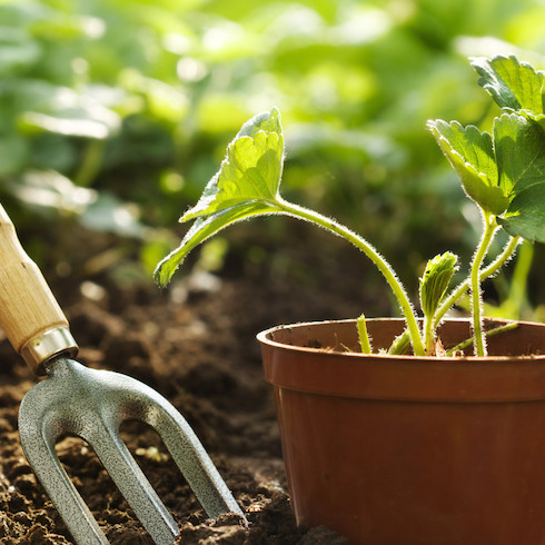 10 Essential Apps For Gardeners