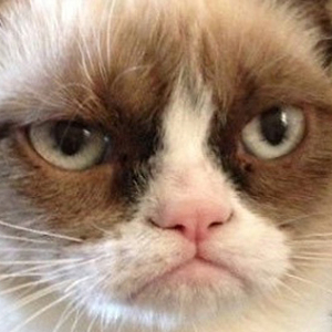 Grumpy Cat to Star In <i>Garfield</i>-Inspired Family Comedy