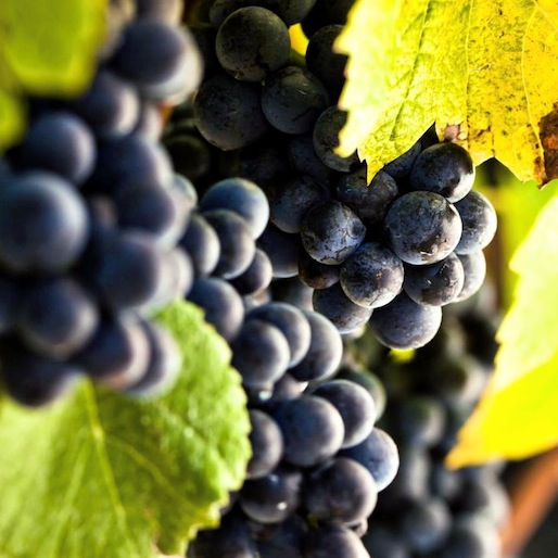 The Sport of Wine Making