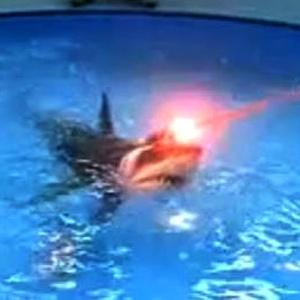 laser-shark.jpg