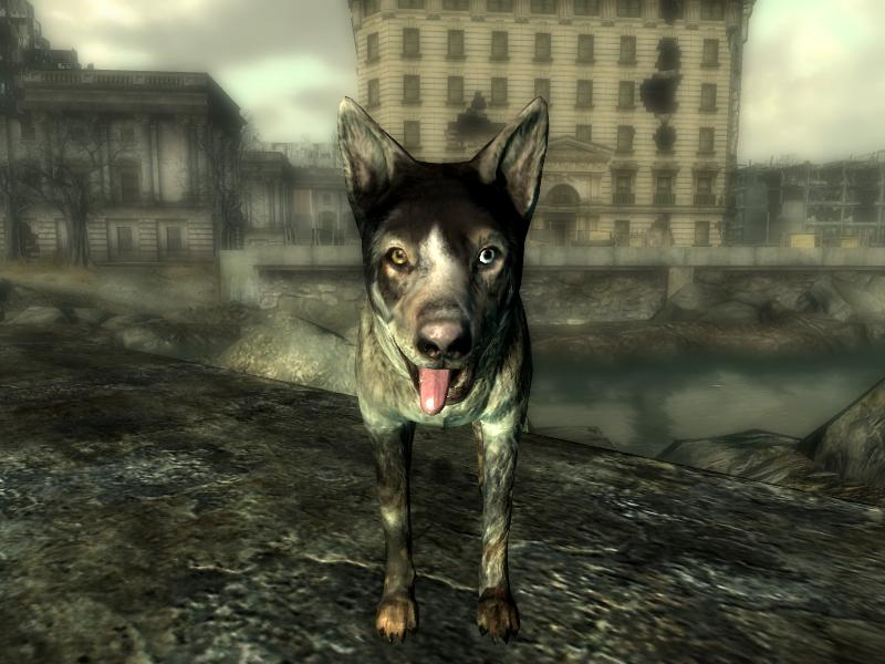 The Dogs Name In Fallout