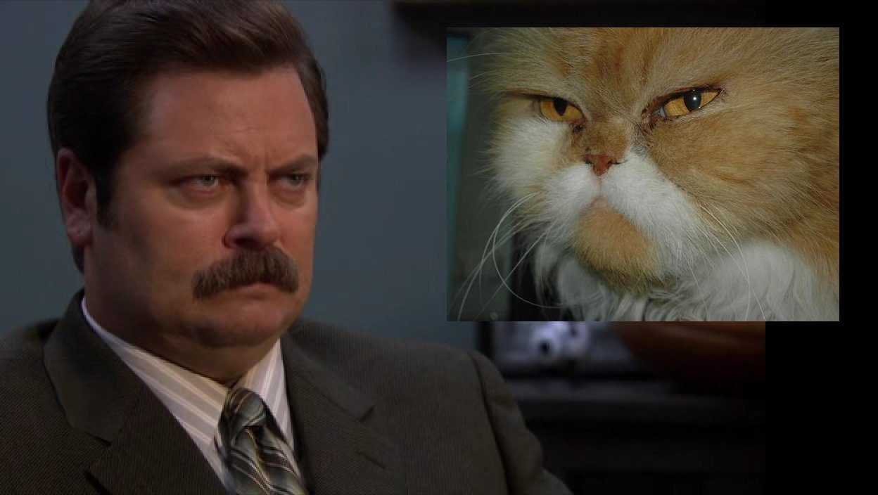 cats-that-look-like-ron-swanson photo_30727_1