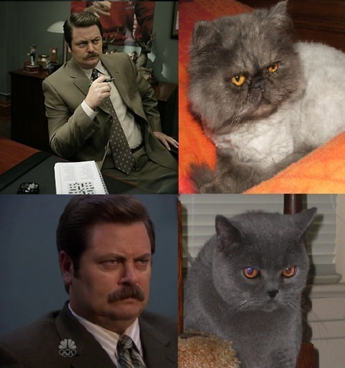 cats-that-look-like-ron-swanson photo_30733_0-25