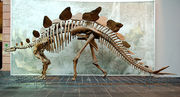 Stegosaurus: Oh you lived in the Jurassic period? Sure you did.