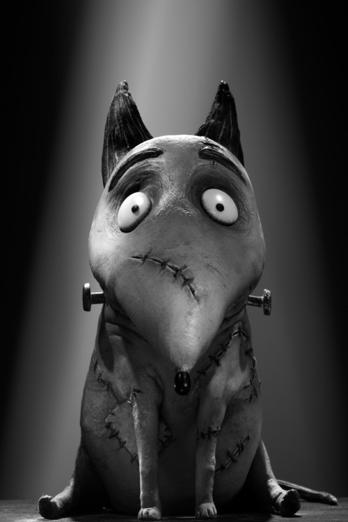 frankenweenie-posters photo_9973_0-5