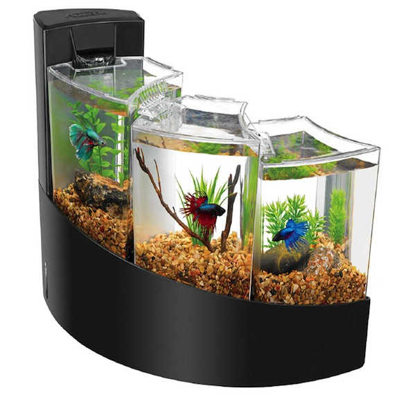22 of the best designed pet accessories design for How much are betta fish at petco
