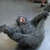 "<i>Wilfred</i> Review: ""Dignity"" (Episode 2.02)"