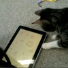 Finally, an iPad Game for Cats!