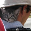 Awesome of the Day: Backpacking Kitty