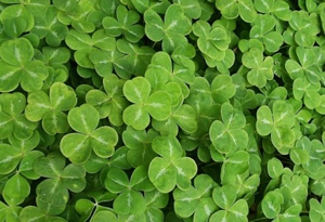 &lt;em&gt;Paste&lt;/em&gt;'s St. Patrick's Day Playlist