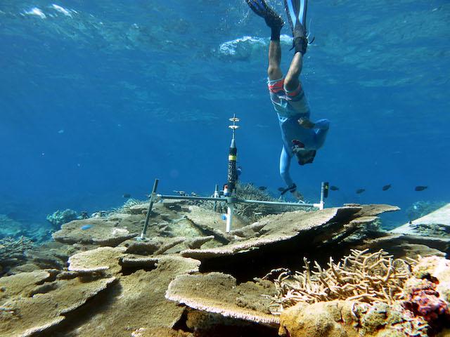 1.coralbeams.jpg