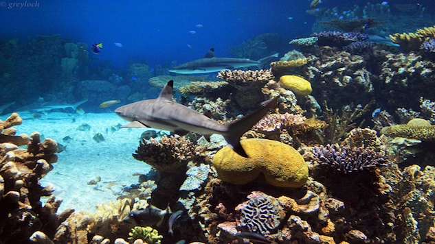 The Decline of Reef Predators Could Mean Disaster For Reefs