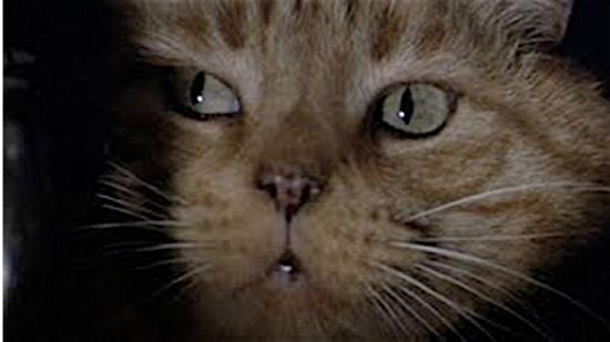 17-Alien-Jonesy-100-Best-Cats.jpg