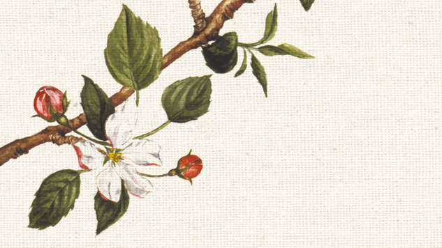 Botanical Shakespeare Pairs Stunning Illustrations With Quotes From