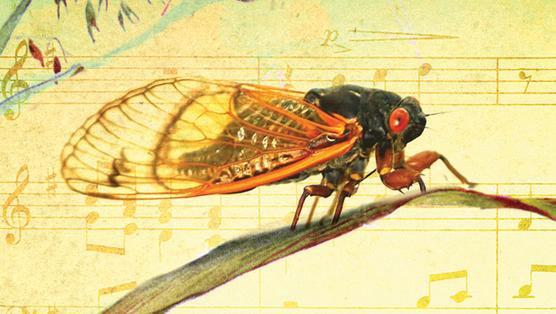 <i>Bug Music</i> by David Rothenberg
