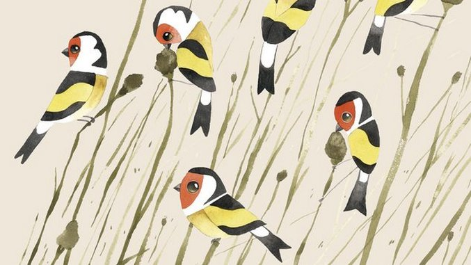 A Charm of Goldfinches? Matt Sewell Illustrates Quirky Animal Groups
