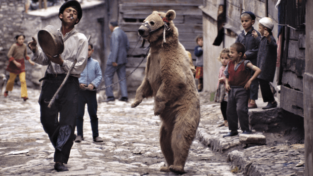 Witold Szablowski's <i>Dancing Bears</i> Reveals That People Are Nostalgic for Tyranny