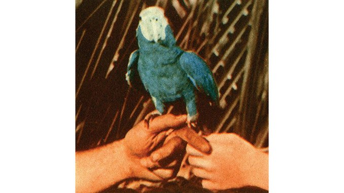 Andrew Bird: <i>Are You Serious</i> Review