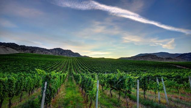 Discovering Canadian Wine With Phantom Creek Estates