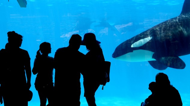 SeaWorld Will Pay $65 Million to Settle Lawsuit Related to <i>Blackfish</i>