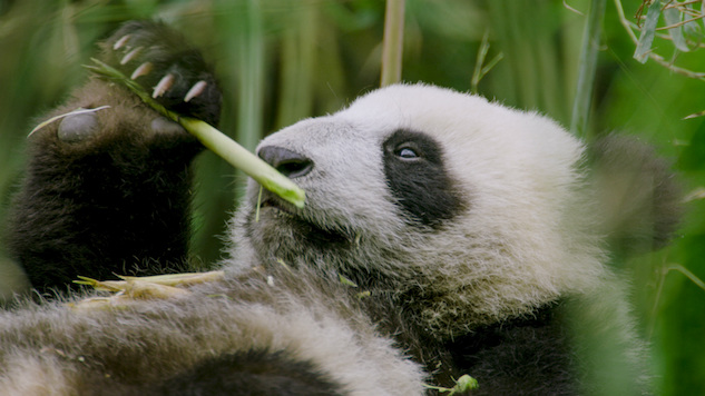 Is It Enough that NatGeo's <i>Hidden Kingdoms of China</i> Showcases Nature but Skips Conservation?