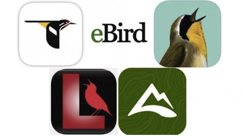 Five Essential Apps for Birding