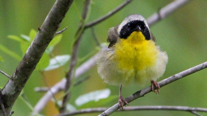 Discovering Atlanta's Abundant Nature Preserves Through Birding