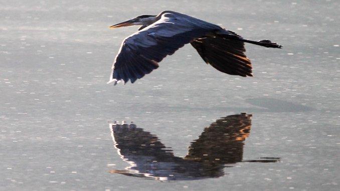 Birds of Atlanta: A New Atlanta Bird for Every Day