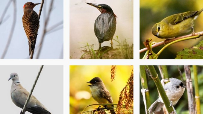 100 Birds in 100 Days—Paste Editor Finds a Salve for Social Distancing
