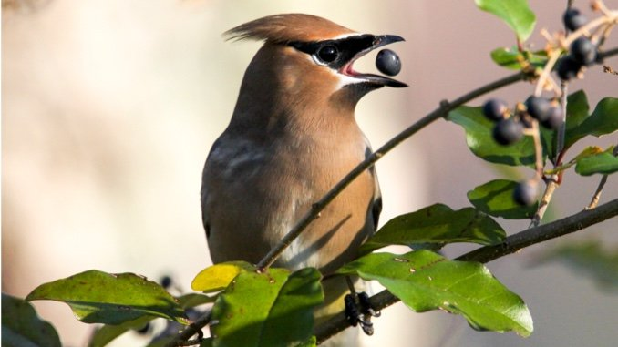 My Year in Birding: Checking Back in with Nature