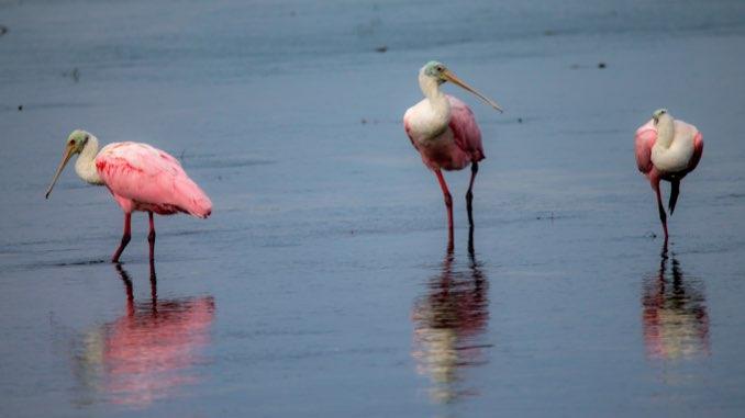 Discovering Nature in Sanibel & Captiva Islands, Florida