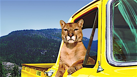 27-Charlie-the-Lonesome-Cougar-Charlie-100-Best-Cats.jpg